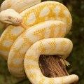 ¿debo aprender spark en scala o en python?