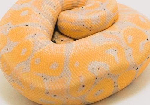 is scala better than python?